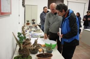 Presentación bonsai alhambra (17)